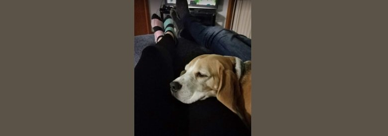 end of day chill with dog at home and watch tv